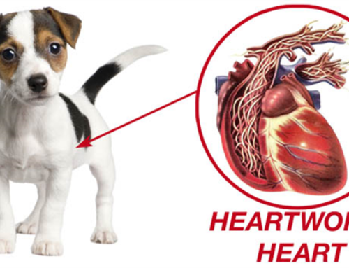 What's that heartworm stuff you guys keep talking about?