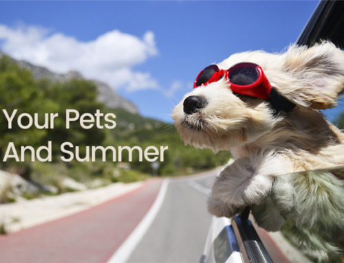 Your Pets and Summer